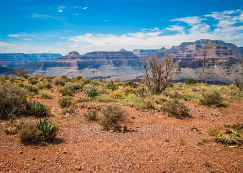 Grand Canyon Max van Vuigt